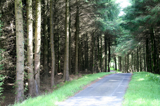 Ballypatrick Forest